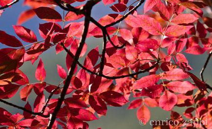 Luce, colore e trasparenza racchiusi in un colpo d'occhio.....
