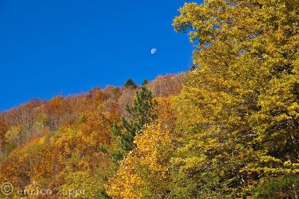 Colori d'autunno in Campigna sotto la luna.