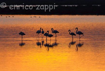 Gruppo di fenicotteri intenti a riposarsi alle luci del tramonto in Salina.