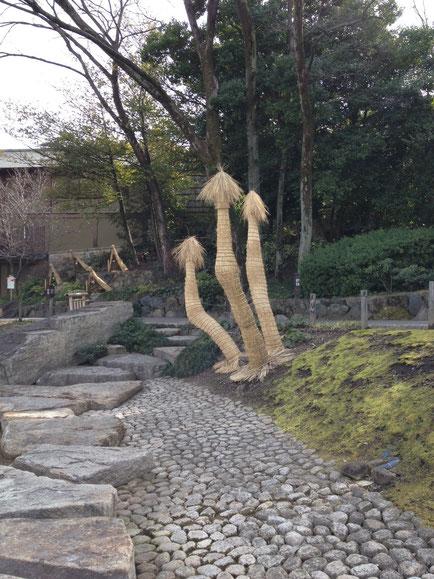 ソテツの冬養生 こもの巻きの仕方 東京 池田山公園風