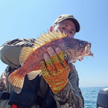 Kelp Rockfish caught on Clouser Minnow