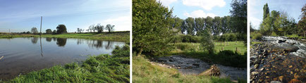 Foto - Naturfotos am Gewässer