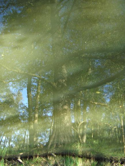 Surreal - Flüchtig - Spiegelung - Doreen Malinka