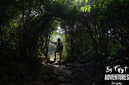 Birding, Birdwatching, Birdingweek, Birdingtour, Ornithologie, Knuckles, Sri Lanka, Birds, Trekking, Walks, Hiking, Kandy, Wildlife, Explorer, Adventure, Nature, Photography, Explorer Week, Trails, Wildlife, Camping, Hikes, Waterfalls, Secret Places