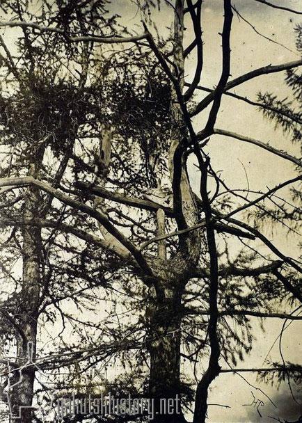 Кэрэх - шаманское жертвенное дерево. Батурусский улус