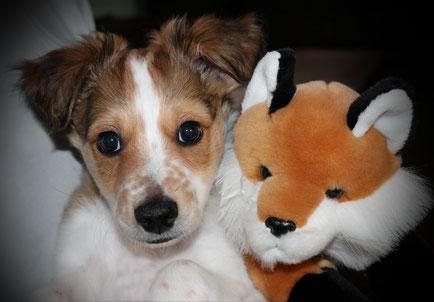 Der Fuchs ist das Wappentier der Fellingshäuser, da musste ich doch mal daneben