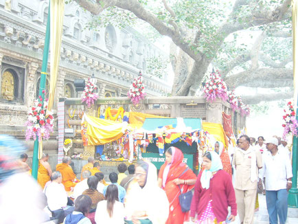 Buddhists under the Bodhi tree