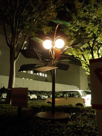solar plants(フクロウ)夜