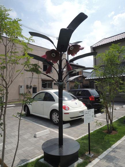 solar plants(ホウセンカ)昼