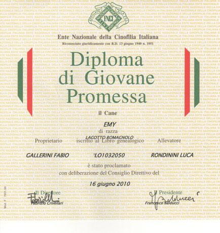 giovane promessa lagotto romagnolo