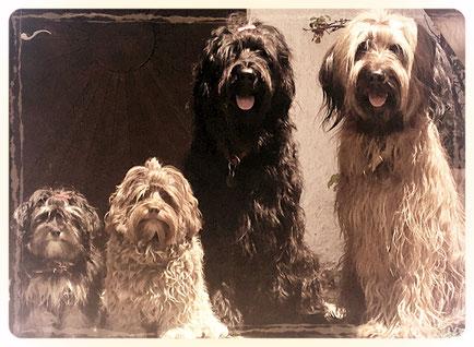 Hundesalon Plisch & Plum - Die Vier Musketiere