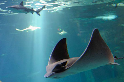 Best things to do in Biarritz - Aquarium - Copyright Aquarium Biarritz