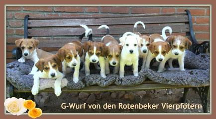 Ginto, Gustav, Grafitty, Gordon, Graf Tica, Gipsy, Gretel, Gino, Giuseppina