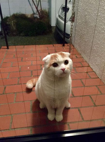 奥さんが寝る準備(鍵のチェック)していると悲鳴が!で駆け付けると玄関に猫が♪ やばい!超カワイイんですけど♡
