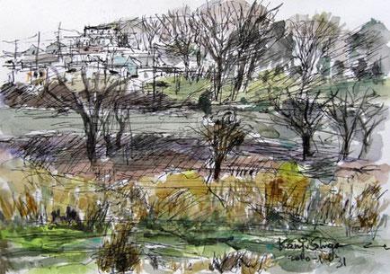 横浜市・境川遊水地公園付近の雑木林