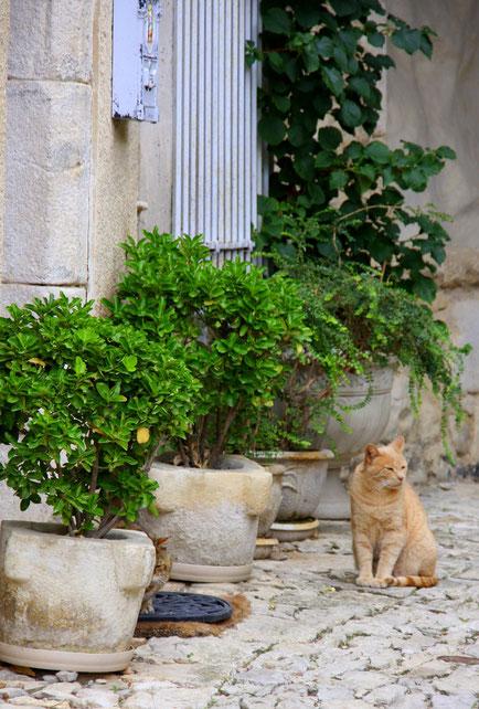 Bild: Banon, Alpes de Haut Provence