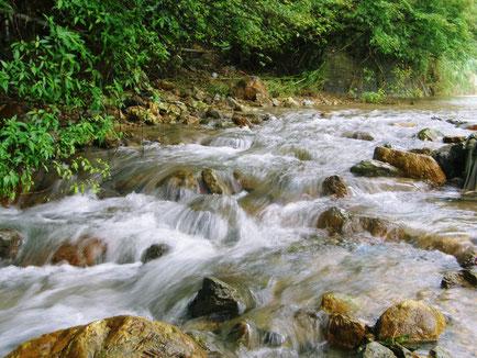 山川酒造の裏に流れる湧き水