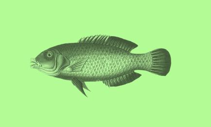PIP (3:1) Persistent, bioaccumulative and toxic