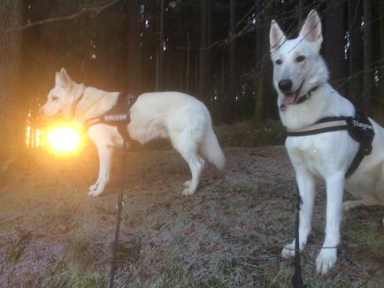 Monty hat die Sonne gefangen