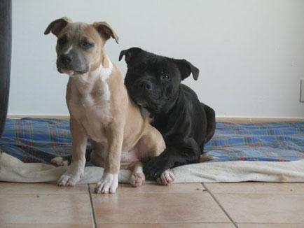 Témoignage Éducation canine dressage Charente Maritime (11)
