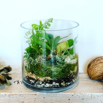 10月 長野 飯田1dayレッスン『植物とコケのテラリウム』作り