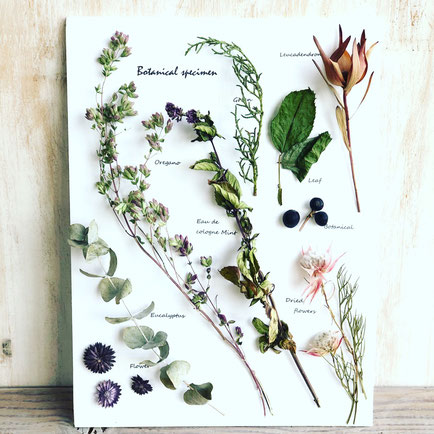 3月 長野 飯田1dayレッスン『ハーブと花の植物標本』作り