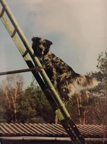 Mr. Nielsen beim Leitertraining, 03/1994 - 20.11.2008