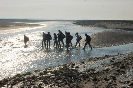 Guide Baie de Somme observation phoques traversée de la Baie activité