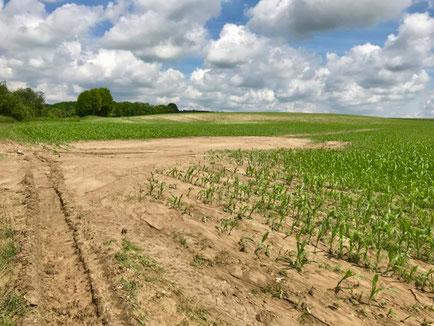 Départ de coulée de boue sur une parcelle en maïs (Acy-en-Multien, 60).