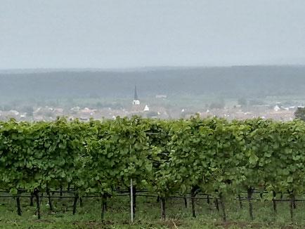Aussicht im Regen auf Sommerach vom Weingut Mangold aus