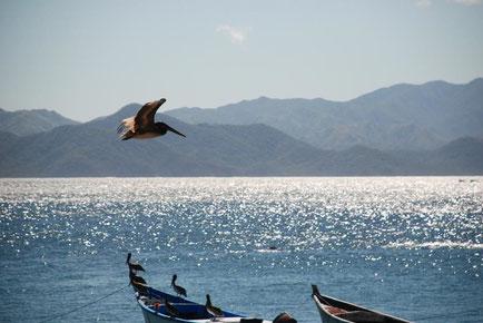 Image credit: IOI Costa Rica