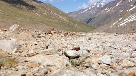 Wüste Fels Steine kein Wasser trocken Vegetation Ötzi Pause Rast Braunschweiger Hütte Similaun Hütte Grenze Italien Osterreich Alpen E5 Berge Wandern