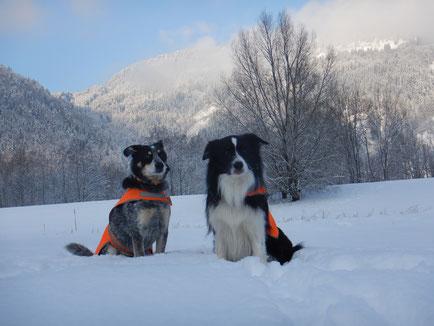 Die Artenspürhunde Bagheera und Zammy bei ihrem Wintereinsatz in den Alpen, Österreich. Foto: A. Grimm-Seyfarth