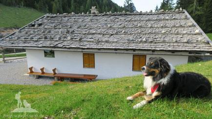 Mit dem Hund und auf die Hütte