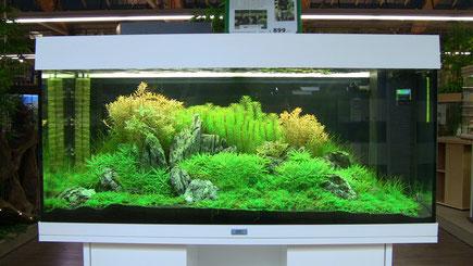 Das gleiche Becken, wie ein Bild zuvor, aufgenommen am 24.11.2011
