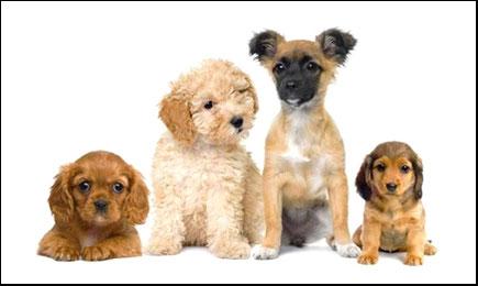 Photo d'une meute pour Dog'N'Co Educateur canin, Conseil comportemental, Médiation animale en Haute Marne