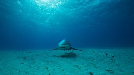 Underwater World Compositing, Unterwasser Welt