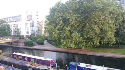 カナルボートが常駐する波止場。ロンドンプレイン(プラタナスの仲間)