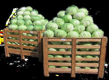 Sarmakraut
