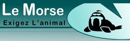 Le Morse partenaire du Nippon Kempo Marseille