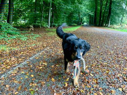 Hunde niemals mit Stöckchen spielen lassen