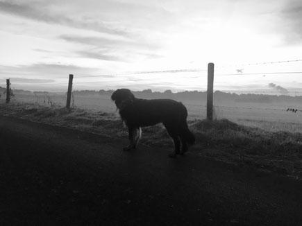 Brief eines Hundes an sein Herrchen