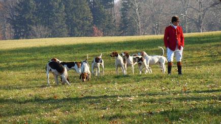 Chasse à courre: des chiens jetables