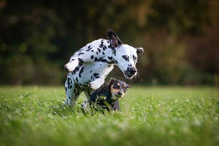 Fotoshooting mit einem Hund im eigenen Garten