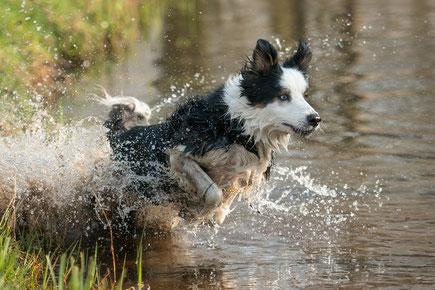 actiongeladenes Fotoshooting mit einem Hund im Wasser