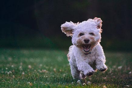Wohnmobil Reise mit Hund