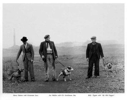 origini-staffordshire-bull-terrier