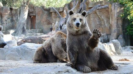 Winkender Bär