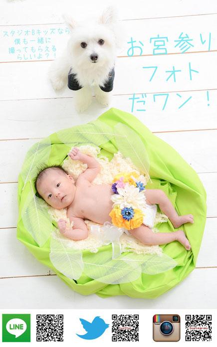 ペット撮影 名古屋 愛知 ペットと一緒 記念写真 こども ペット 犬と一緒