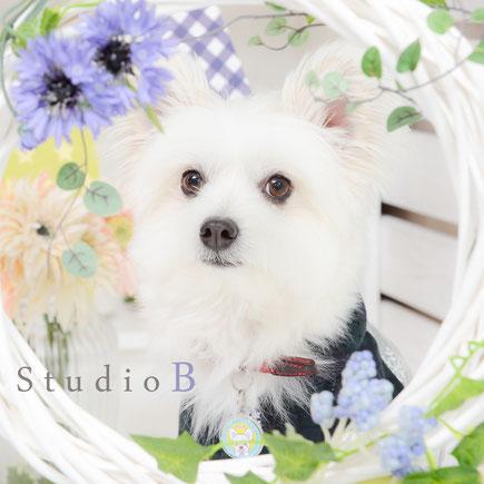 ペット撮影 ペット写真 犬 記念写真 愛犬と一緒 名古屋 愛知 ペット写真館